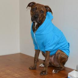 Large Neon Blue Fleece Doggie Hoodie